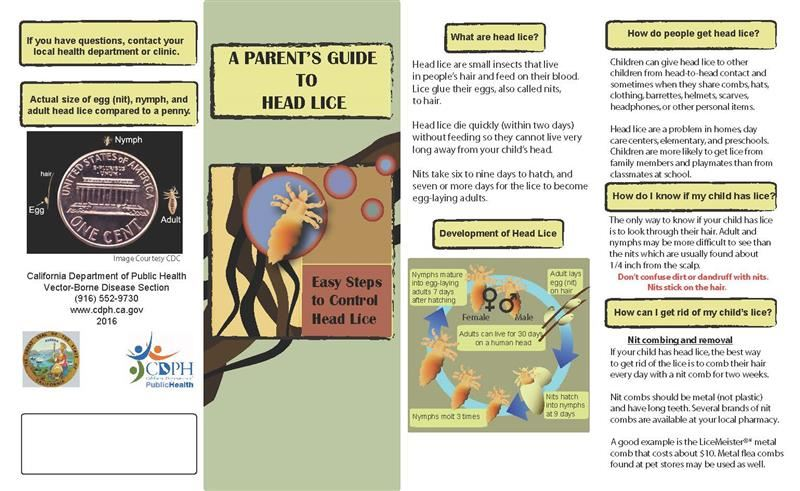 Parent Guide to Head Lice Flyer